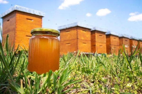 Santo Tomás presentará investigación sobre gel antiséptico creado a partir de la miel